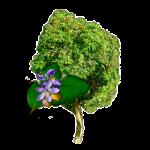 Дерево Гуаяк