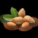Миндаль орех