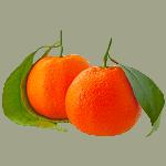 Листья мандарина