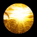 Солнечный аккорд