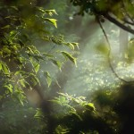 Ноты леса